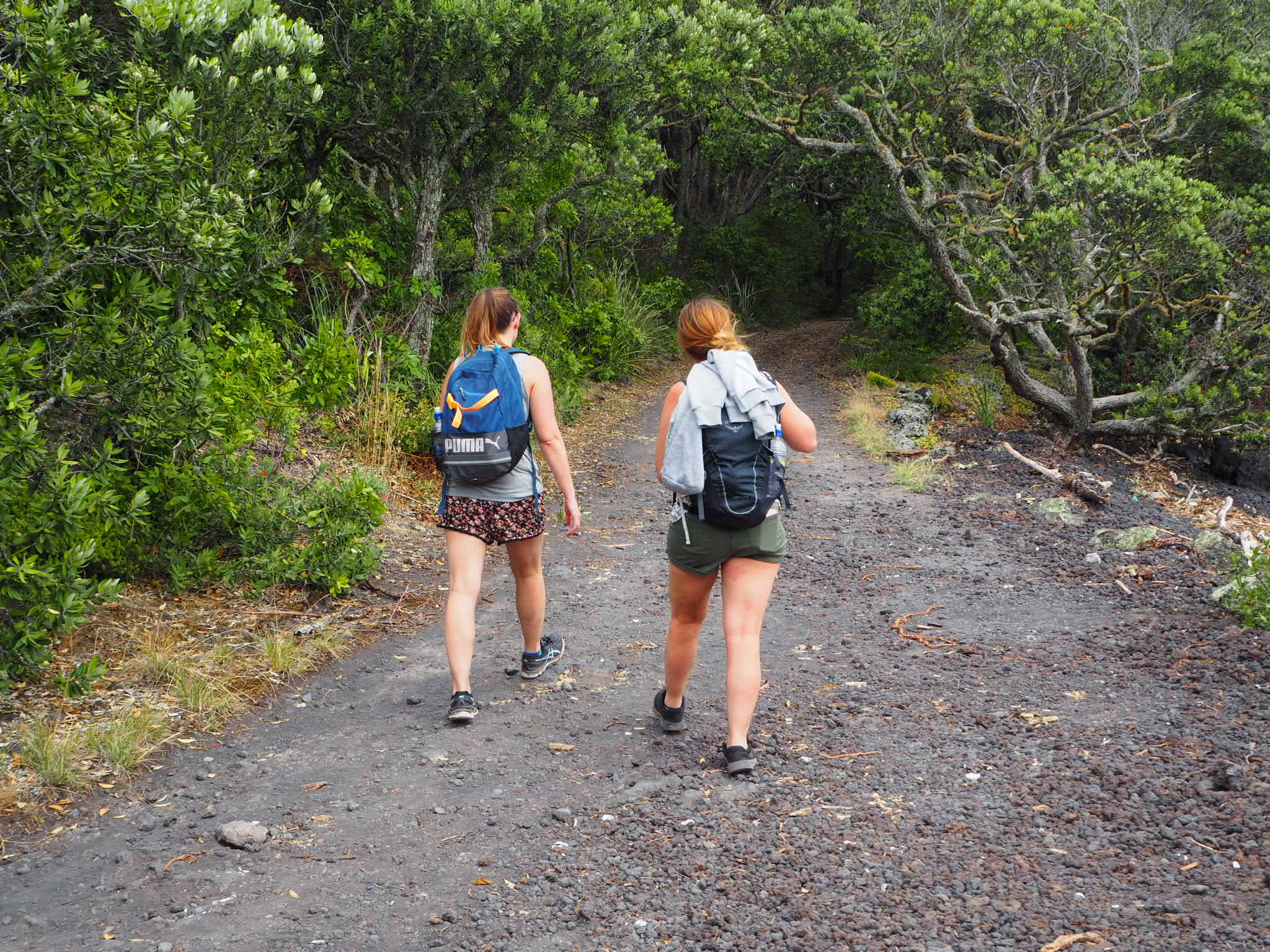 Walking the Rangitoto Summit Track