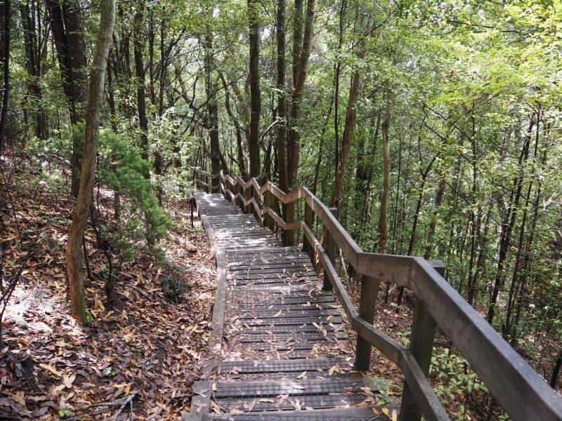Rangitoto Summit Track