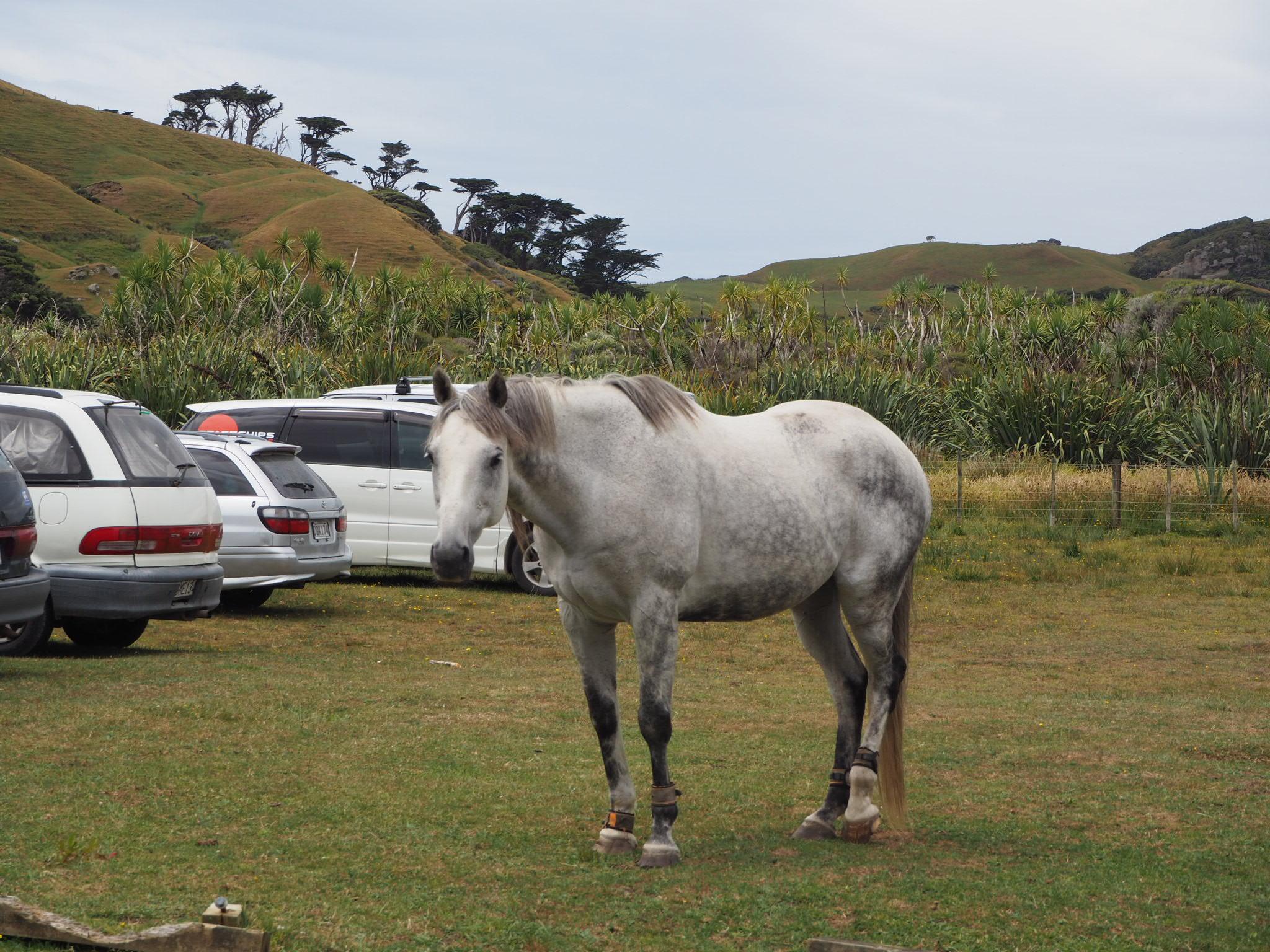 Wharariki Beach, Nelson, Abel Tasman, Golden Bay