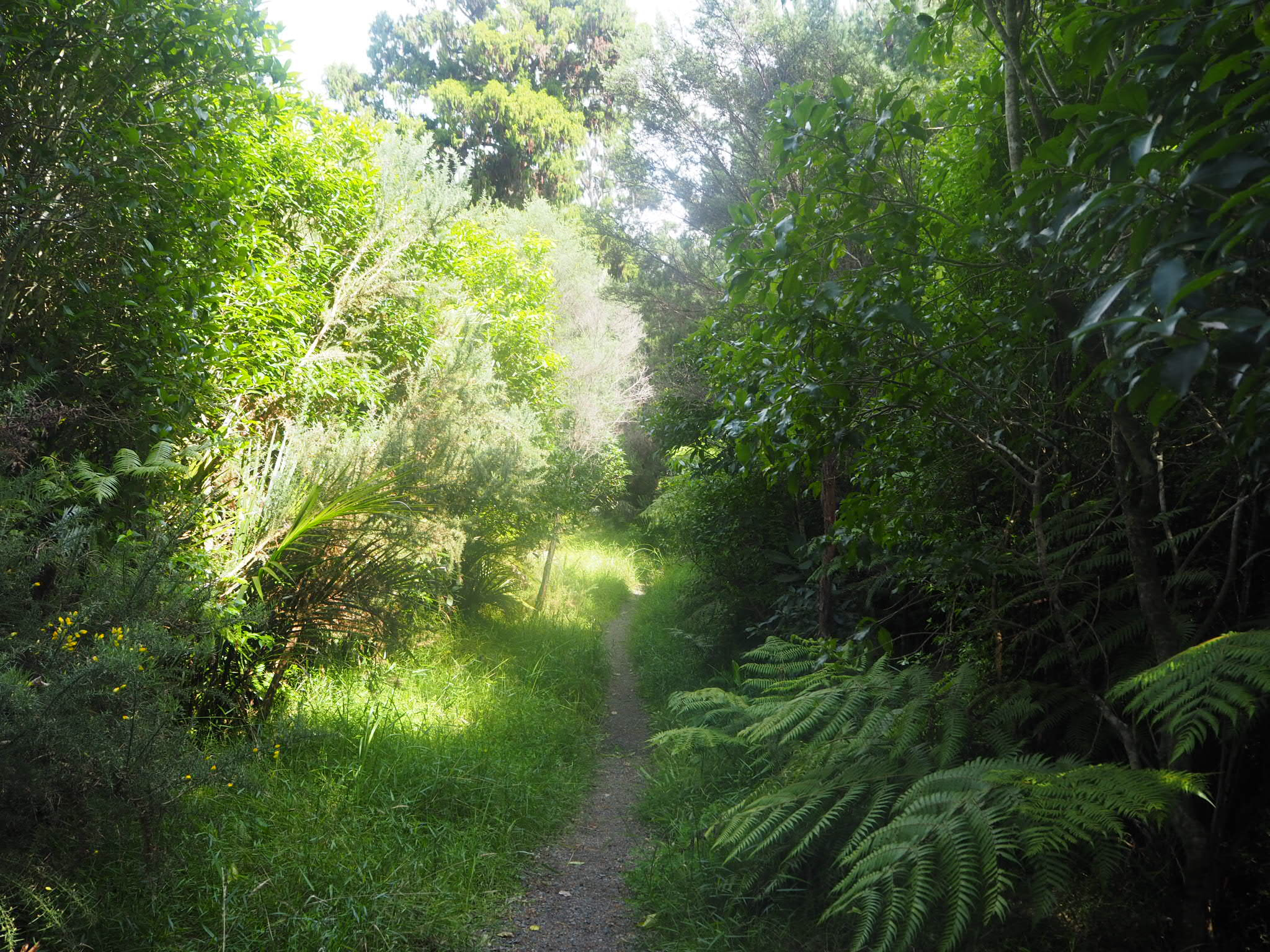 Puhoi Track
