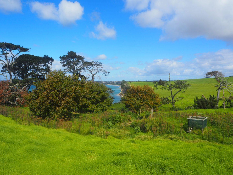 Long Bay Coastal Track, Auckland