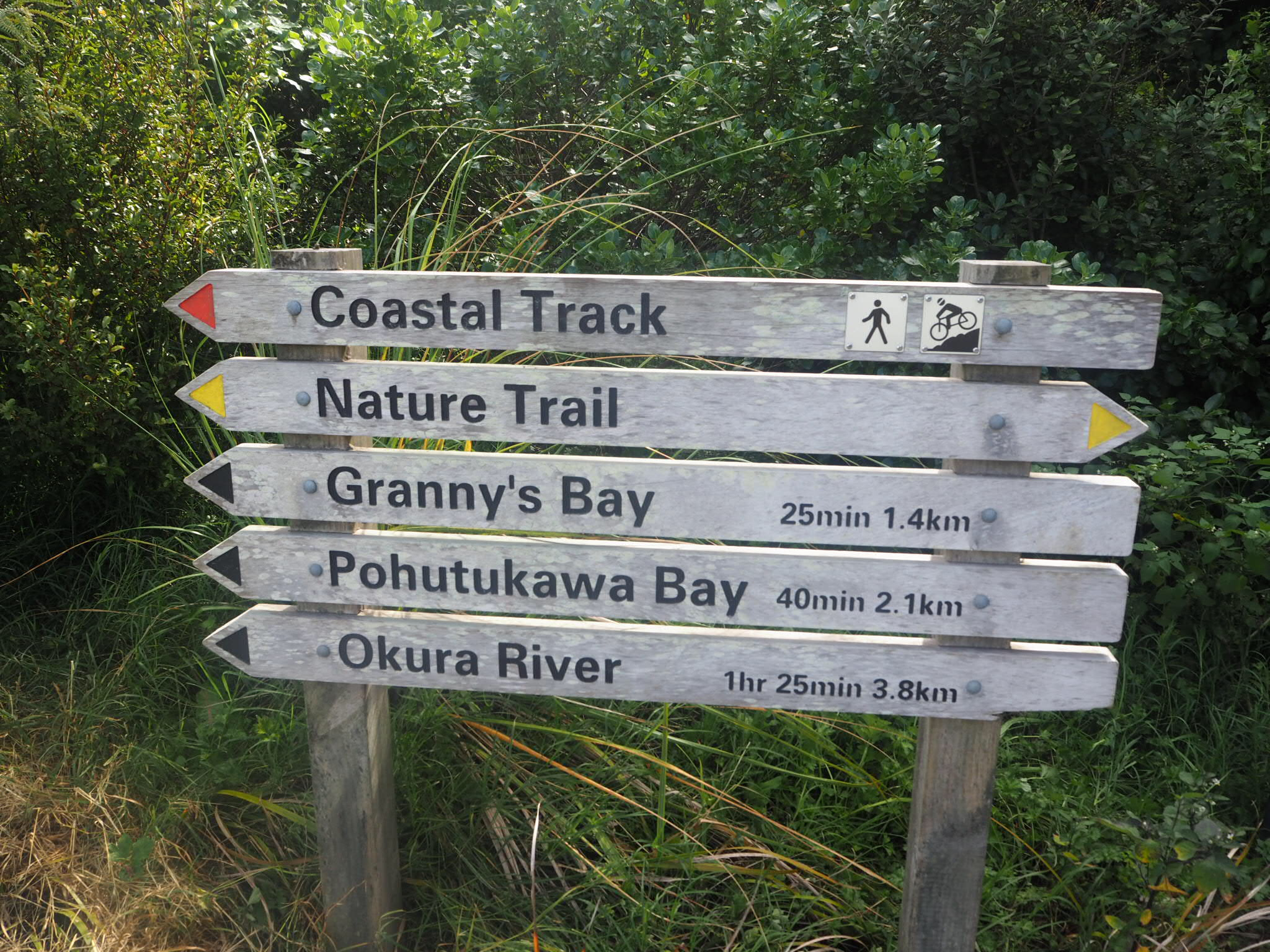 Long Bay Coastal Track, Auckland