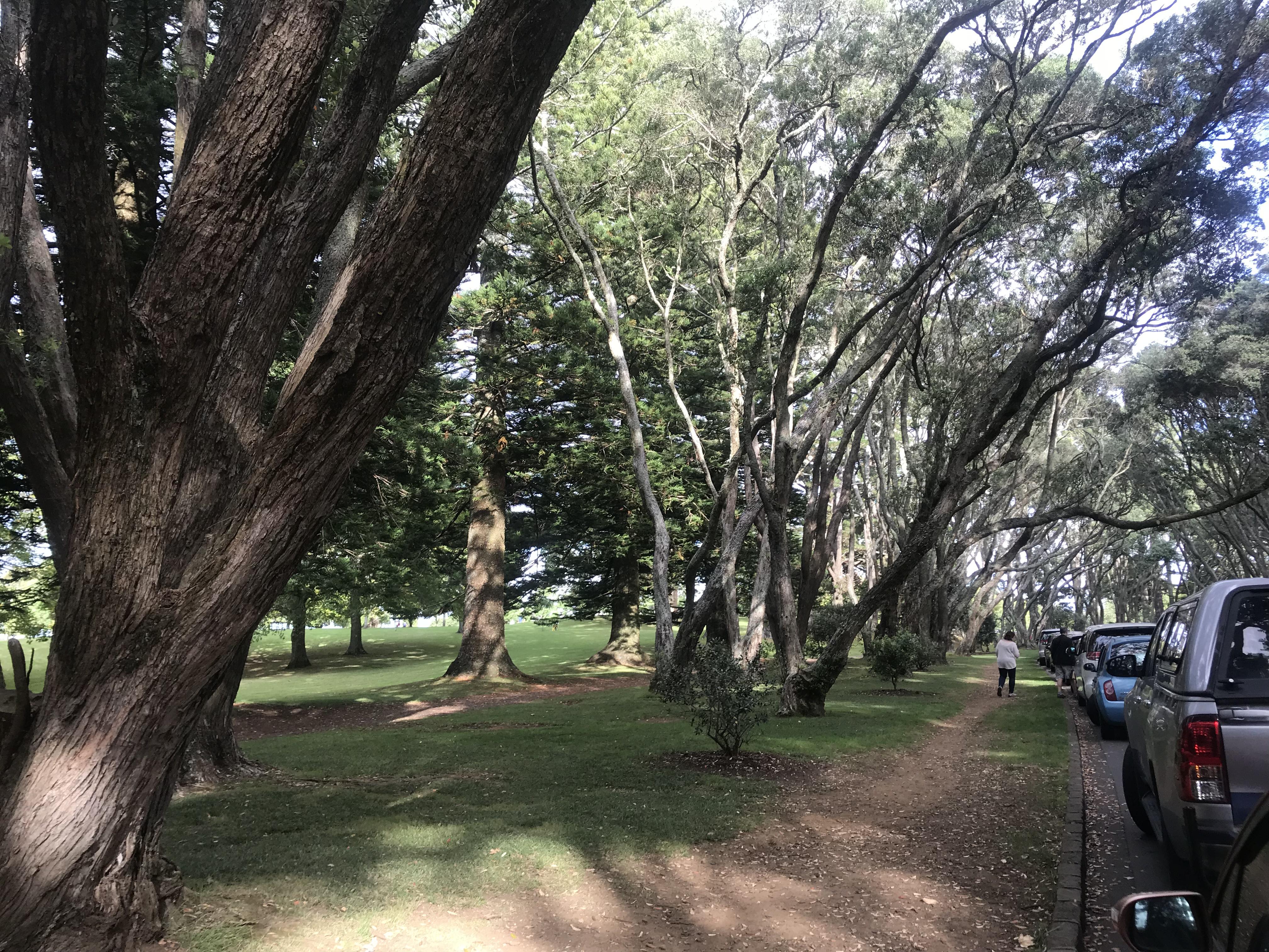 Cornwall Park, Auckland