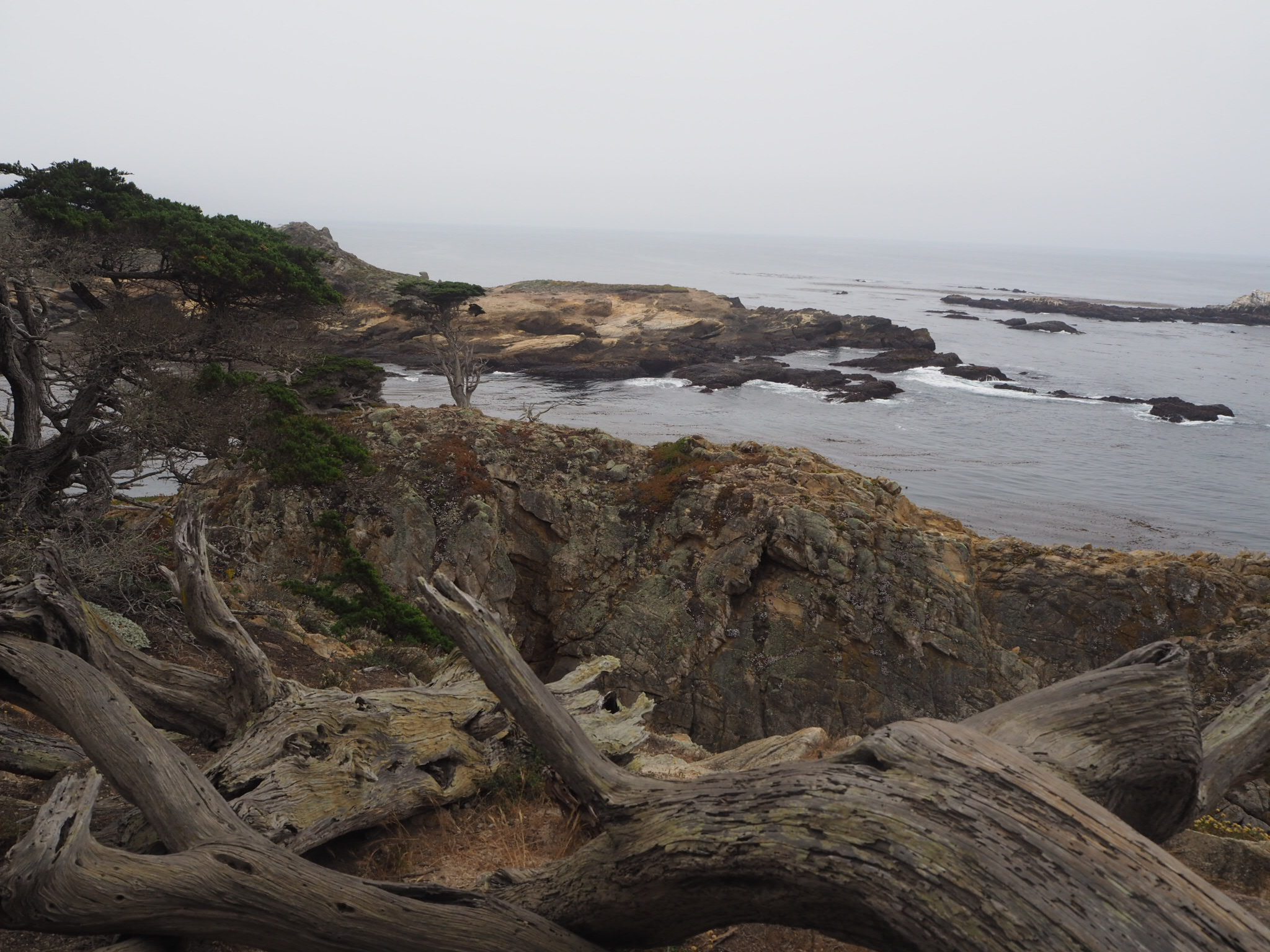 Point Lobos State Reserve, Pacific Coast Highway, California