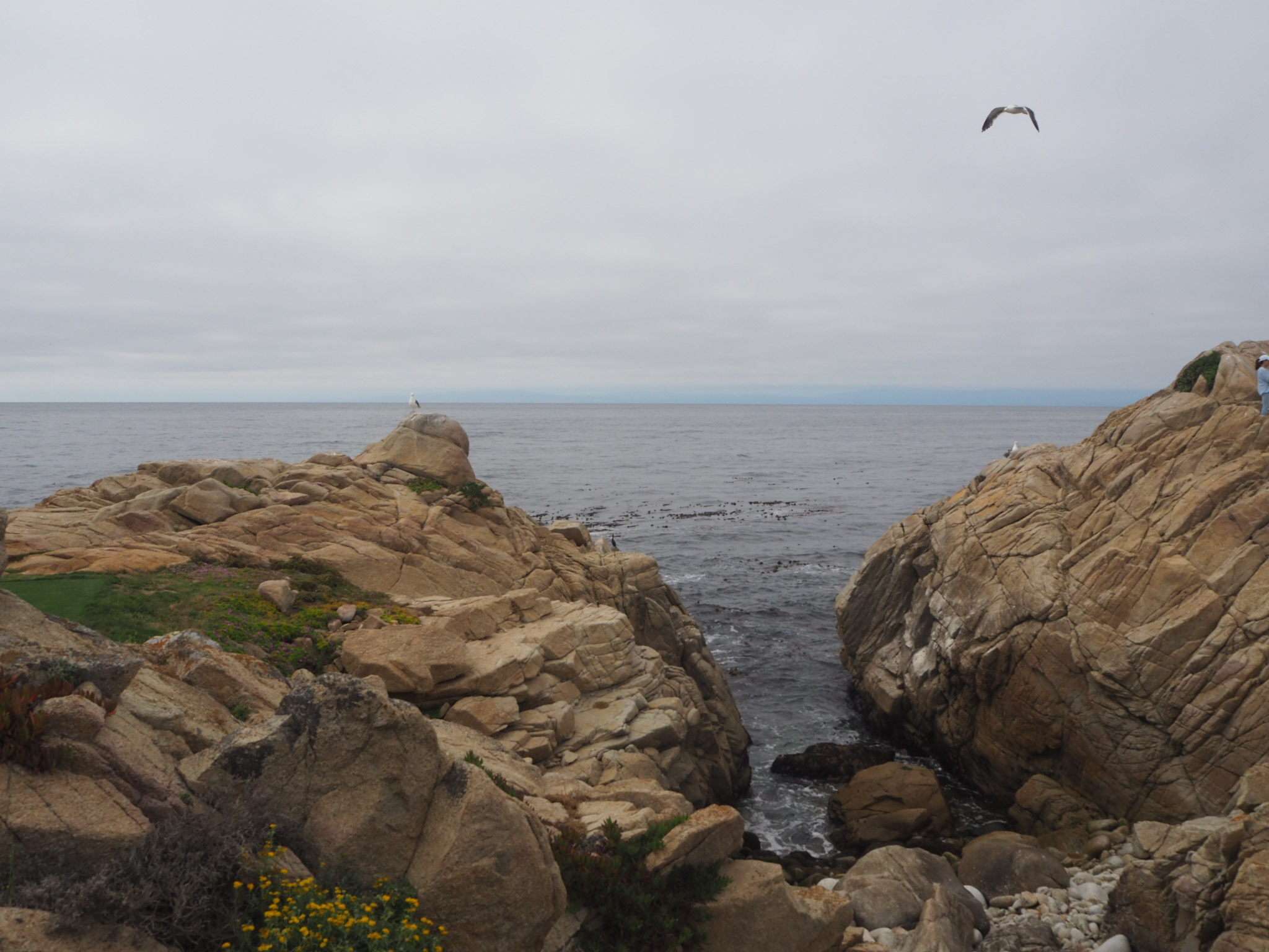 17 mile drive, Pacific Coast Highway, California