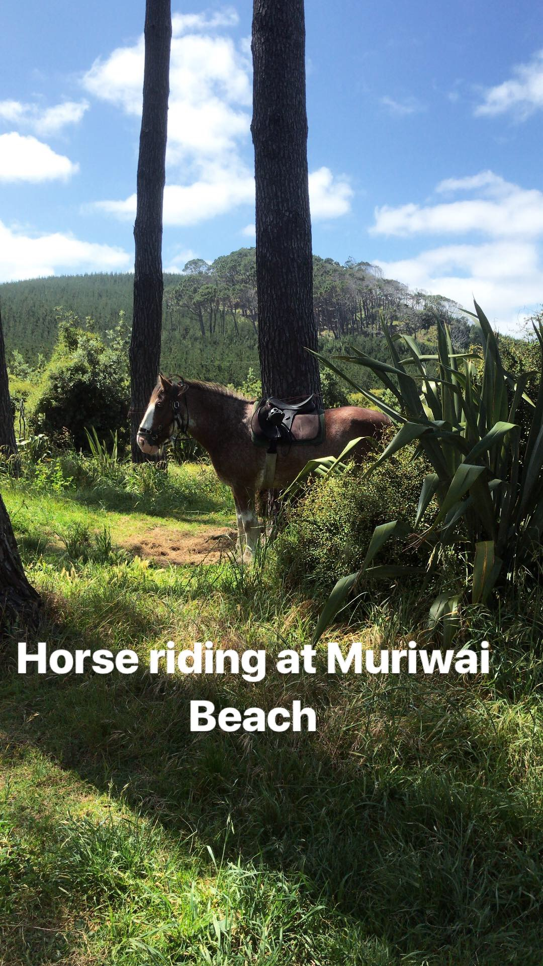 Horse riding, Muriwai Beach, New Zealand