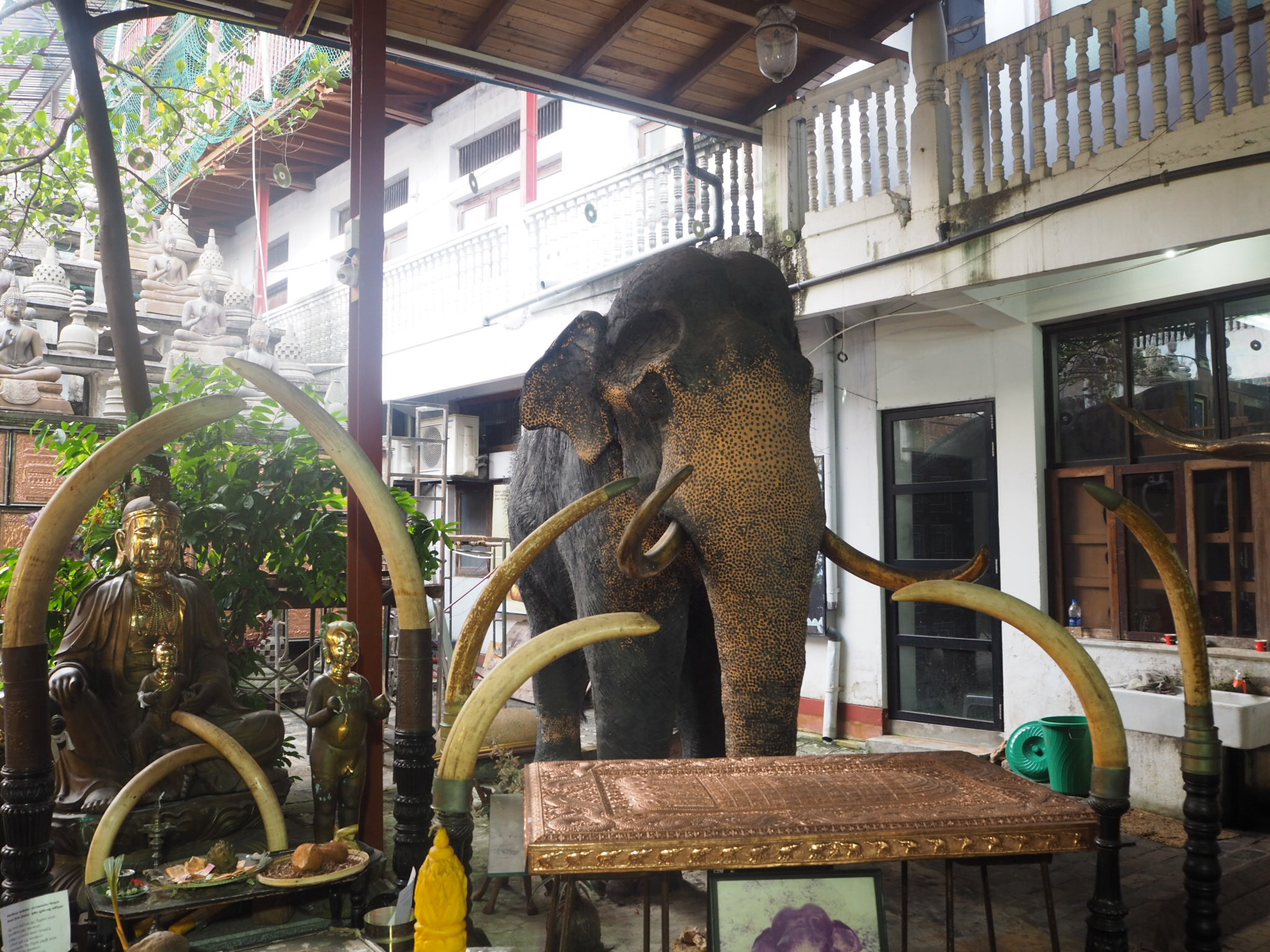 Tuk Tuk Safari, Colombo, Sri Lanka